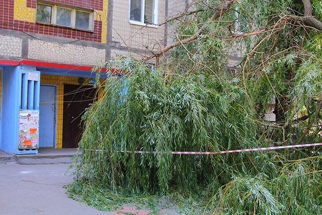 Что нужно, чтобы спилить дерево во дворе многоквартирного дома?