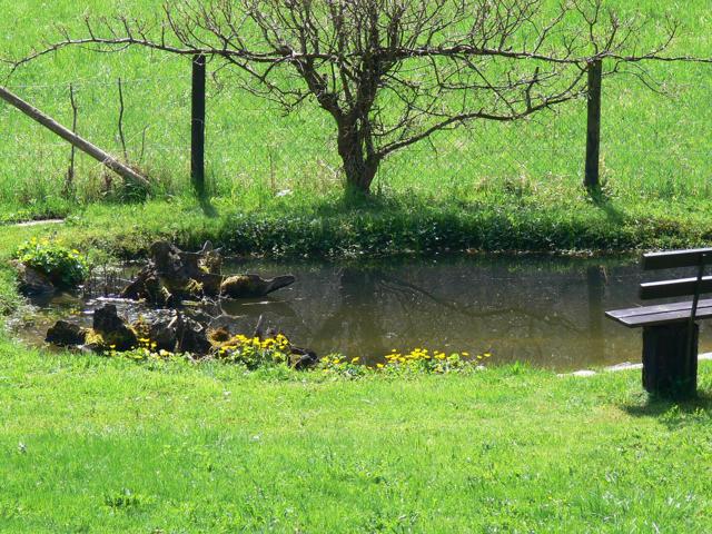 Что делать, чтобы участок не затапливало с пруда?