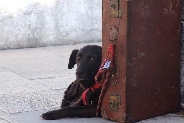 Как взять собаку с собой за границу по законодательству?