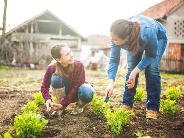 Как продать свой урожай, собранный на дачном участке?