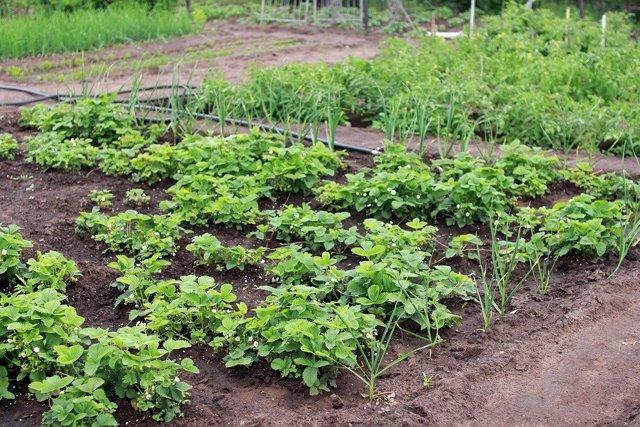 Изменения в законе о садоводческих товариществах