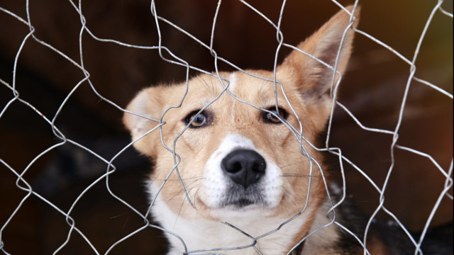 Законы о содержании животных в России гражданами