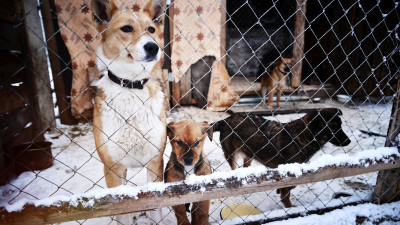 Как содержать домашнее животное по новым правилам, чтобы не попасть в тюрьму