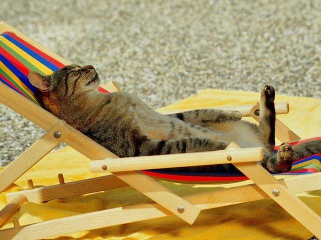 Как правильно уйти в оплачиваемый отпуск: когда можно уходить в отпуск, сколько должны заплатить и как оформить
