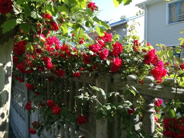 Можно ли прописаться на дачном или садовом участке, временная регистрация